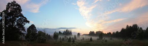 Туман в лесу    - 200222589