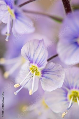 Background of purple flowers - 200226390