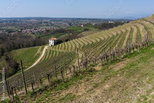 Deurstickers Wijngaard Embrace of the Vineyards on the hills of Friuli