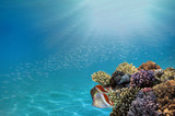 Photo of a tropical Fish on a coral reef - 200229957