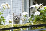 Katze am Balkon - 200236777