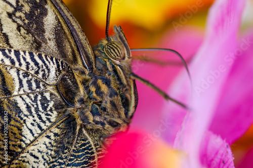 Foto Murales butterfly