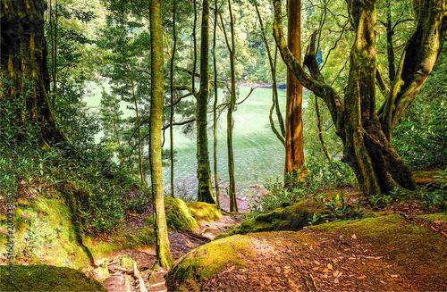 Fotobehang Weg in bos Forest lake path landscape