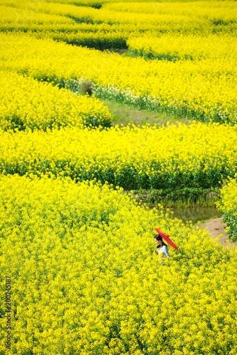 Fotobehang Zwavel geel rape flower water town in Jiangsu, China