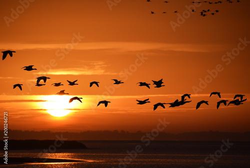 Leinwandbild Motiv Gänse und Kraniche im Morgenlicht