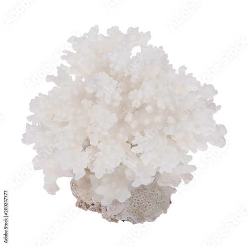 light lush coral side view isolated on white