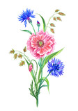 Bouquet of poppies, cornflowers and ears, watercolor drawing on a white background isolated with clipping path.
