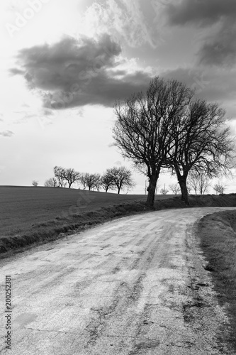 Poster Wit Road and trees in the countryside, black and white landscape