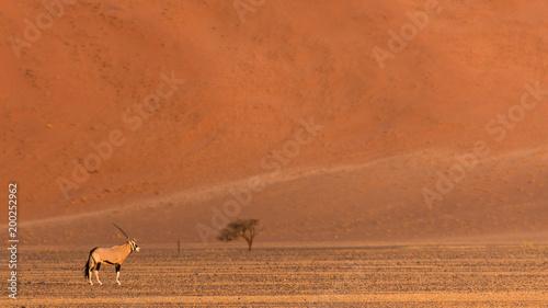 Fotobehang Baksteen un oryx sur la dune