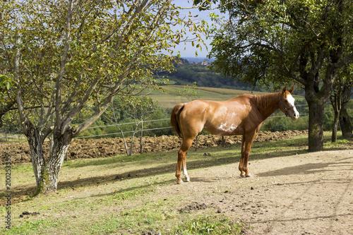 Fotobehang Paarden Wild horses