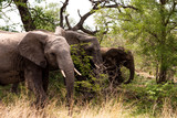 Three elephants, South Africa