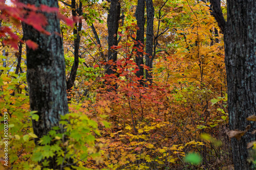 autumn forest, all the foliage is painted with golden color in the middle of the forest road.  © Юлия Моисеенко
