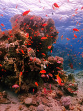 Diving in underwater coral reef world
