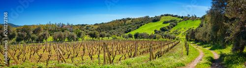 Deurstickers Wijngaard Vineyard field in spring