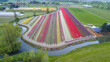 Aerial view of a tulip field