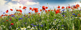 Summer happiness: meadow with red poppies :) - 200288792