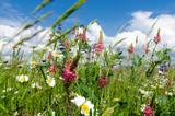 Frühlingserwachen: Meditation, Glück, Freude, Entspannung: Relaxen in Blumenwiese mit leuchtend schönen Margeriten unter blauem Himmel mit Sonne :) - 200289121