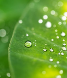 Beautiful detail of leaf with water drops, macro photo. - 200306582