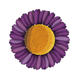 cute sunflower flower decorative icon