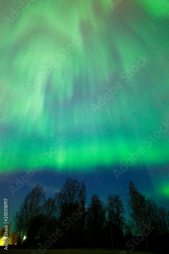Canvas Noorderlicht Northern lights aurora borealis tree landscape at night