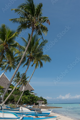 Keuken foto achterwand Tropical strand Beach Palm Tree 3
