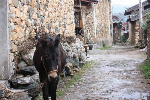 cheval dans ruelle dans la province du yunnan en chine