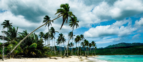 Palm trees hanging over sandy beach in the Caribbean