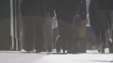 Crowd Walking On New York Street, Cute Small Dog, Slow Motion, - 200345370