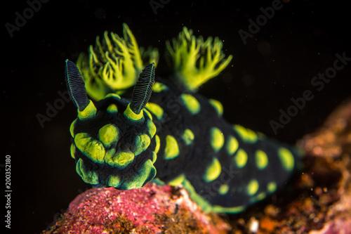 Keuken foto achterwand Bali Nudibranch at Liberty wreck