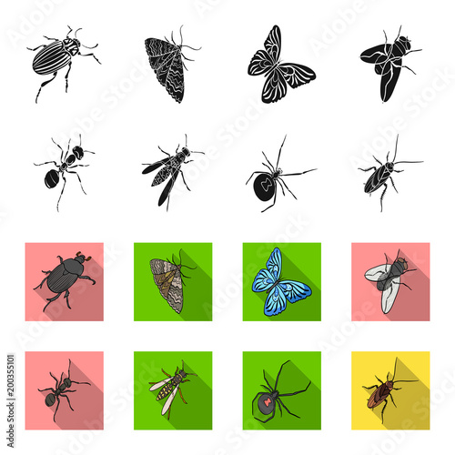 An insect arthropod, an osa, a spider, a cockroach. Insects set collection icons in black,flet style vector symbol stock isometric illustration web.