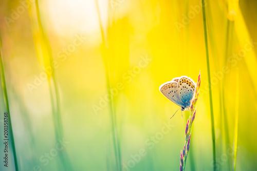 Keuken foto achterwand Geel Nature background concept. Beautiful summer meadow background. Inspirational nature closeup.