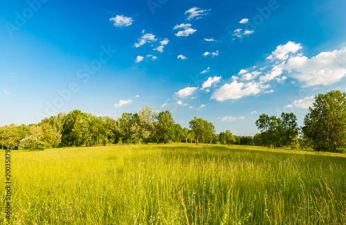 Summer meadow landscape © icemanphotos