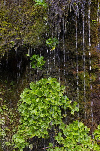 Foto Murales plante humide humidité mur végétal vert eau couler mousse plante