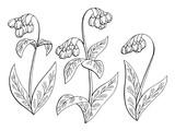 Comfrey flower graphic black white isolated sketch set illustration vector  - 200386740