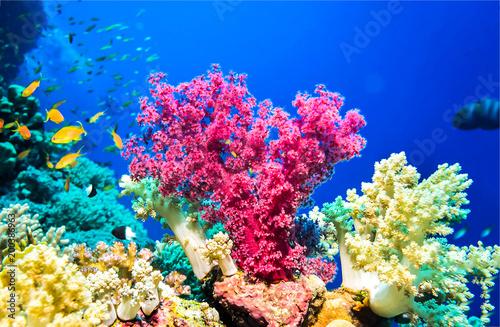 Underwater pink coral reef landscape