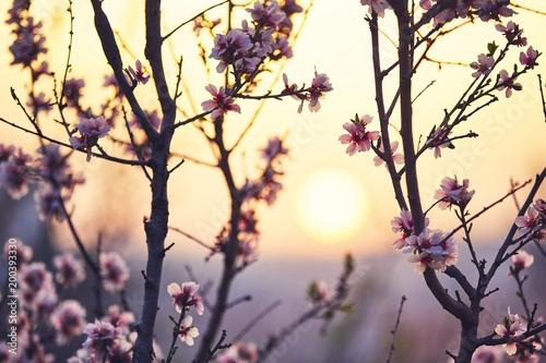 In de dag Ochtendgloren Spring in nature