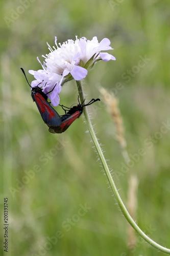 Foto Murales Z Życia insektów