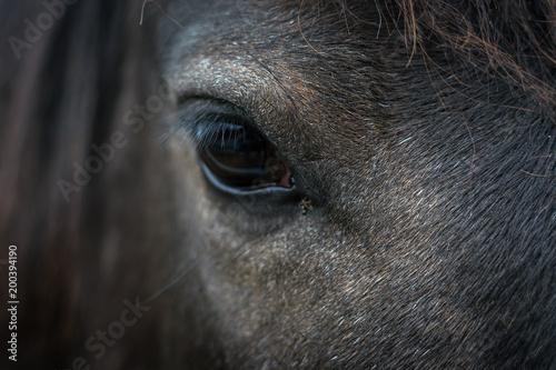 Fotobehang Paarden ojo de caballo