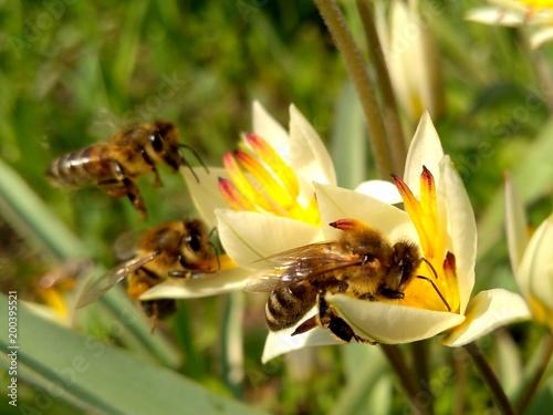 Plexiglas Bee Squadron