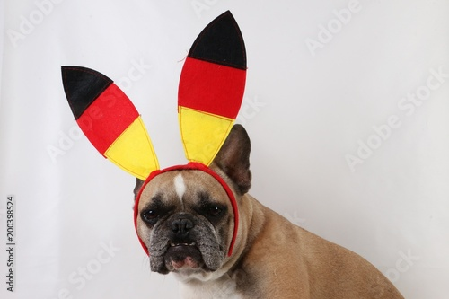 Foto op Plexiglas Franse bulldog french bulldog portrait in the studio with german fan decoration on the head