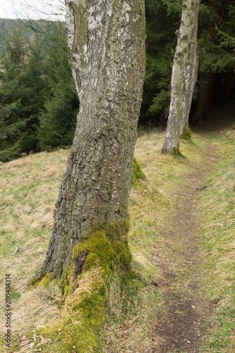 Fotobehang Weg in bos Sendero entre un bosque de pinos. Alemania