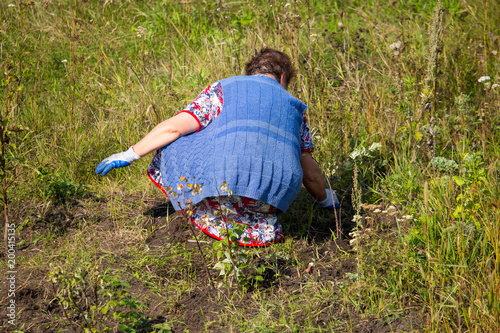 Fotobehang Gras Grandmother tears off the grass in the garden
