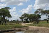 Landschaft mit Elefanten, Tarangire Nationalpark, Tansania