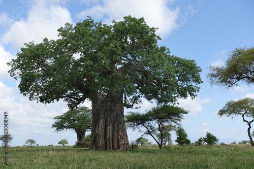 Deurstickers Baobab Baobab-Baum im Tarangire Nationalpark, Tansania