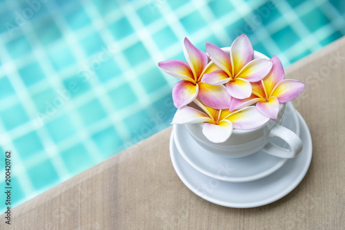 Aluminium Plumeria Colorful fresh Plumeria flow in white coffee cup over blurred blue swimming pool water background, summer tropical concept