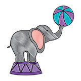 circus elephant with a ball over white background, colorful design. vector illustration