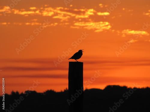 Poster Oranje eclat Singing in the Morning