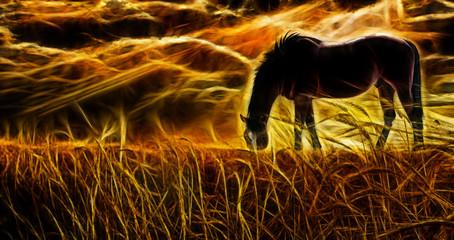 Sunset. Horse