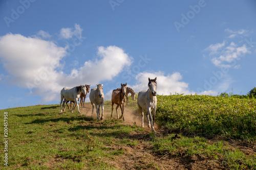 Fotobehang Paarden 日高の馬