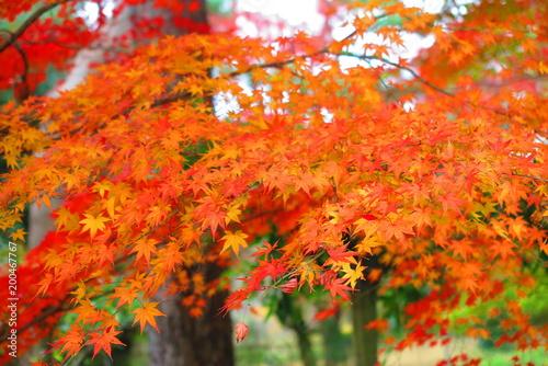 Fotobehang Baksteen 秋の公園の風景31